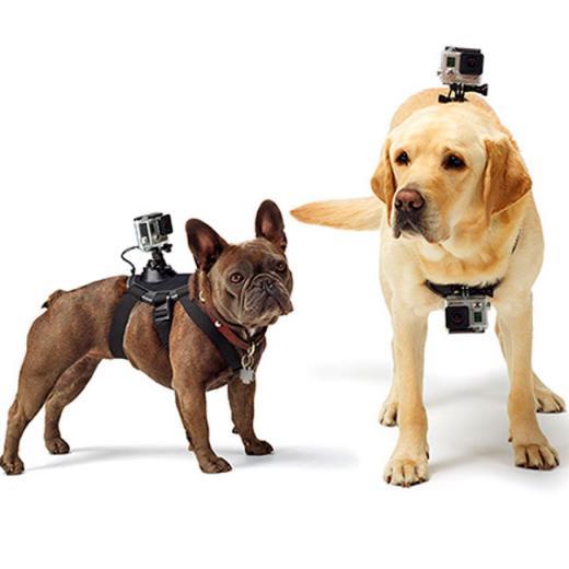 Suporte Canino para C�meras GoPro